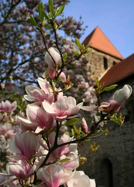 Blick auf das Herrenhaus Muldenstein im Frühling © Annett Freudenreich