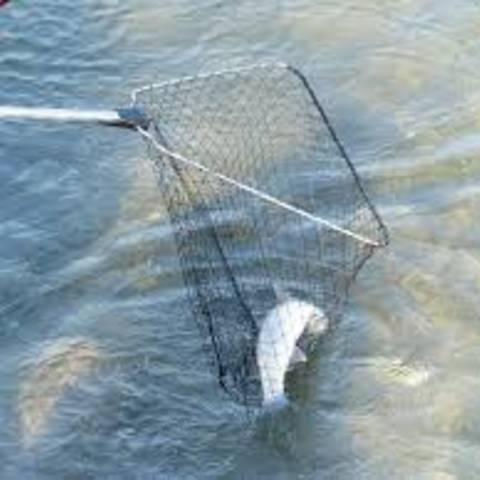 Fischereibehörde