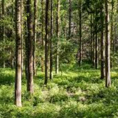 Forstbehörde © pixabay
