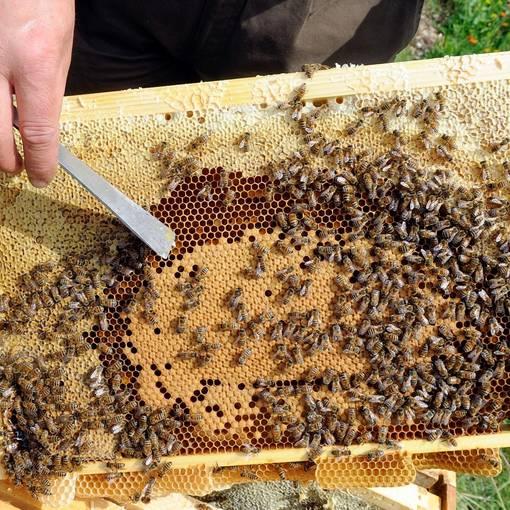 Blick auf eine Bienenwabe © Schortewitz Augenklick Hobbyimker Baumann